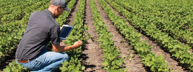Перистальтические дозирующие-Насосы-Сельское хозяйство-и-фермер